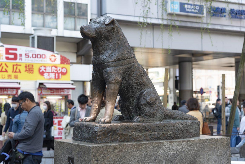 Красивата история на Хачико
